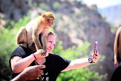 Monkeys (Gwenaël Piaser) Tags: ouzoudfalls ouzoud falls marrocos morocco maroc cascade cascadesdouzoud monkey singe selfie unlimitedphotos gwenaelpiaser canon eos 6d canoneos eos6d canoneos6d fullframe 24x36 reflex rawtherapee 85mm 85mmf18 canonef85mmf18usm ef85mmf18usm ef85mm usm ef85mmusm canonef85mm118usm prime شلالاتأوزود tadlaazilal scimmia look eyes regard smartphne phone portrait 1000