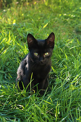 (Anny-) Tags: portrait cat closeup animal green grass garden eyes dof day sun light paw background depth field black fur kitty