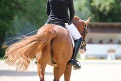 _MG_9175 (dreiwn) Tags: dressurprüfung dressurreiten dressurpferd ridingarena reitturnier reiten reitplatz reitverein reitsport ridingclub equestrian horse horseback horseriding horseshow pferdesport pferd pony pferde tamronsp70200f28divcusd dressur dressuur dressyr dressage