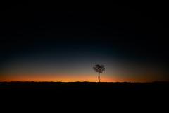 untitled (ChrisRSouthland) Tags: alicesprings australia contraluz d800 nature nikond800 sunset zeissdistagon21mmf28 colour desert evening lastlight tree minimal minimalistic minimalism star gegenlicht sonnenuntergang