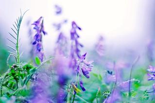 Wildflowers impression
