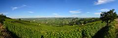 Barolo (supersky77) Tags: barolo piemonte vino vigneto vineyard italy summer estate langhe unesco world heritage