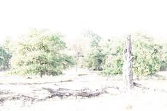 High key landscape (Hamert, the Netherlands) (Renate van den Boom) Tags: 08augustus 2018 boom europa hamert highkey jaar landschap limburg maand maasduinen natuur nederland renatevandenboom stijltechniek