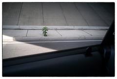 L1007966 (Kimberly Peery Sherman) Tags: leicam10 28summaronltm 4000 80 11000 concrete perseverancegrowthsurvivorplant bransfordavenue i440 overpass