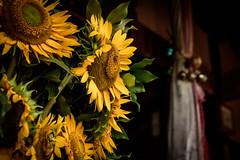 大師堂ー夏ーSummer Daishido temple (kurumaebi) Tags: yamaguchi 秋穂 山口市 nikon d750 ヒマワリ 夏 summer sunflower 大師堂 寺 temple