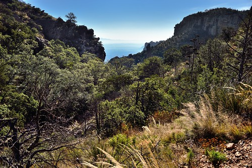 Trees, Plants and a Lush Vegetation While Hiking in the Chisos Mountains (Big Bend National Park)