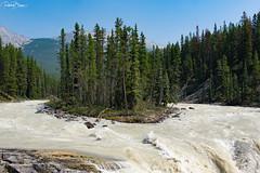 Sunwapta Falls (since 1960) Tags: kanada canada alberta nationalpark rockymountains berge wald forest himmel sky wolken clouds river flus wasserfall waterfall insel island fujifilmxt1