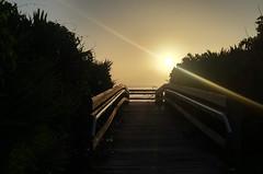 Sunrise Morning Upon the Beach ! (jlynfriend) Tags: phonephoto lg bridge railing walkway skyview skyscape sun sunrise plants wood clouds