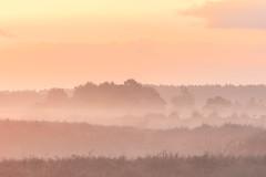 Morning Layers (Pieter ( PPoot )) Tags: zonsopkomst dwingelderveld lagen heide nevel