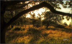 In The Rough.. (Picture post.) Tags: landscape nature green trees fence gate shadows fields paysage arbre