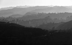 Layers of Los Angeles (Torsten Reimer) Tags: usa landscape landschaft northamerica himmel losangeles hills california unitedstatesofamerica monochrome griffithobservatory layers sky trees schwarzweis blackandwhite hügel mounthollywood unitedstates us
