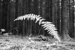 solar panels (Lux Obscura) Tags: fern trees forest bw