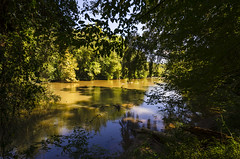 Enoree River at Musgrove Mill (rschnaible (On Holiday)) Tags: musgrove mill enoree river the south carolina woods forest outdoor landscape historical revolutionary war battle site
