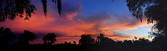 Sunset August 20, 2018 (Jim Mullhaupt) Tags: sunset sundown dusk sun evening endofday sky clouds color red gold orange pink yellow blue tree palm outdoor silhouette weather tropical exotic wallpaper landscape nikon coolpix p900 jimmullhaupt manateecounty bradenton florida cloudsstormssunsetssunrises photo flickr geographic picture pictures camera snapshot photography nikoncoolpixp900 nikonp900 coolpixp900