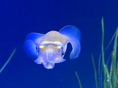 IMG_1406 (paschulea) Tags: monterey aquarium