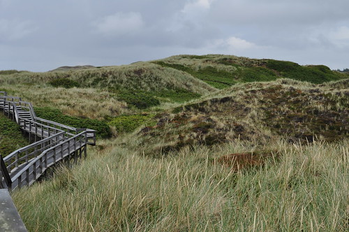 Promenade dans les dunes, Kampen, Sylt, Nordfriesland, Schleswig-Holstein, Allemagne.