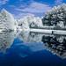 Reflection in Still Water IR