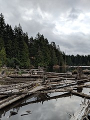Westwood Lake Park (stephenwilley) Tags: trees forest lake vancouverisland nanaimo