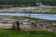 Bison at Yellowstone National Park (tvrdypavel) Tags: animal bison bubble buffalo cloud clouds colorful explode fog forest fur geyser grassland group heat herd hills hot hotsprings landscape mammal mountains nature outdoor outdoors park pool shoot sky snow spout spring springs steam symbol tail tourism travel trees tundra valley water waterfall wild wildlife yellowstone yellowstonenationalpark