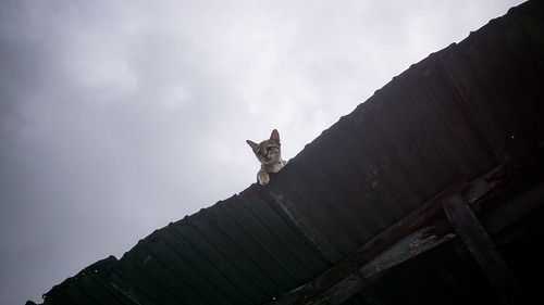 Kitten On A Tin Roof