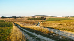 That Copse Again, This Time Stitched for Extra Value (stevedewey2000) Tags: salisburyplain sptaeast landscape sigmadp2 grassland copse trees grasses downland tracks byways byway track stitch ms ice