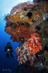 C O L O R F U L (Randi Ang) Tags: colorful reef parigi moutong parigimoutong central sulawesi tengah sulteng indonesia underwater scuba diving dive photography wide angle randi ang canon eos 6d fisheye 15mm randiang wideangle