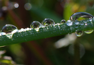 Droplets on the grass