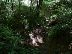 A stream from the top (しまむー) Tags: panasonic lumix dmcgx1 gx1 g 20mm f17 asph 東北大学 オープンキャンパス tohoku university tour