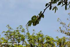 Green Line (Nourah.A.Edhbayah (Super Flower♥إظبيه)) Tags: nourah abdullah edhbayah q8 kuwait نوره عبدالله اظبيه الكويت