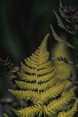 Roughage (Vanessa wuz Here) Tags: 90mm 7dwf macro devoniangarden universityofalbertabotanicalgarden devon botanicalgarden lowkey shadows copyrightvanessabartosek