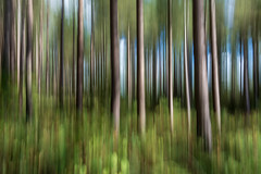Pine Forest - ICM (andythomas390) Tags: trees fun nikon tree nature icm woods intentional camera movement 18200mm d7200 intentionalcameramovement