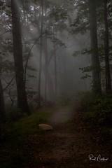 Foggy Path (Reid Northrup) Tags: 2018 nature blueridgemountains fog foggy forest nikon northcarolina reidnorthrup rocks trees woods