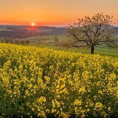 Austria (makeourmomentskochi) Tags: traveling sunset flowers yellow traveltips travel nature photo plants hiking tours