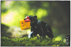 Om nom nom (Priovit70) Tags: lego bear wiener basket bokeh summer woods olympuspenepl7