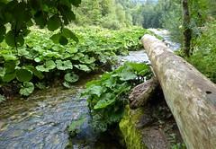 Gorges de la Wutach / Wutachschlucht / Bade-Wurtemberg / Forêt Noire / Allemagne / 8 août 2018 (leonmul68) Tags: wutach boll deutschland allemagne germany forêtnoire schwarzwald badewurtemberg 2018