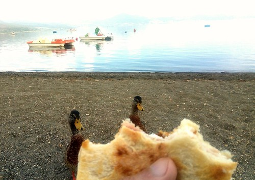 lunch in the company of ducks