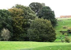 DSC_1705 (PeaTJay) Tags: nikond750 langrishhousehotel hampshire manorhouse hotels gardens outdoors nature flora fauna plants trees bushes lakes grass grasses flowers