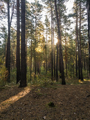 IMG_20180919_092444 (alexey.turkov) Tags: huaweip9 huawei forest autumn sun sunlight