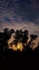 Sun pray (Ibrahim Hamaty) Tags: sunset trees sun saudiphotography jazan samsung galaxy المصورينالسعوديين السعودية الجنوب جازان جيزان بيش غروب المغرب شمس