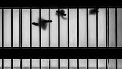 Footprints (Leipzig_trifft_Wien) Tags: belfast northernireland vereinigteskönigreich gb black blackandwhite people glass lookingup streetphotograhy streetphoto contrast lookup monochrome