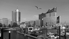 Hamburg Sporthafen and the seagull on duty - (rotraud_71) Tags: hamburg hafen harbor bw seagull elbphilharmonie columbushaus water ships buildings bridge bird sky