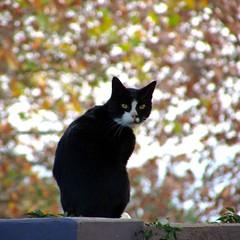 guesthouse cat (CatnessGrace) Tags: cat cats gato gatos gatto gatti katze katzen bokeh bokehlicious