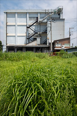 yokohama-3187-ps-w (pw-pix) Tags: grass grasses weeds plants green lush long flourishing dense tall pole wires poles building buildings sheds factory warehouse stairs steps windows doors clouds sky hot humid concrete railings steel corrugated weathered structures trees industry industrial grey blue white beige brown black shinisogocho isogo isogoku keihinindustrialzone keihinindustrialarea keihinindustrialward yokohama kanagawa japan