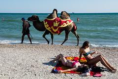 . (Joanna Mrowka) Tags: camel street streetphotography travelphotography travel ukraine zeliznyi port black sea holiday ngc littledoglaughedstories