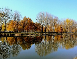 reflection in the river