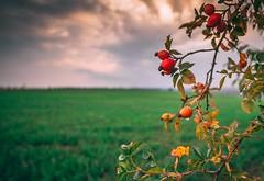 September. (Robert Hájek) Tags: czech czechrepublic czphoto sonyalpha sony sonya7ii samyang nature landscape september