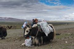 D4I_1581 (riccasergio) Tags: china cina tibet alidiqu xizangzizhiqu cn kailash kora