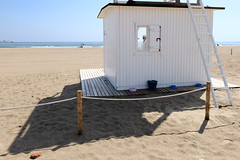 LAST SUMMER DAYS (VICENTEPAYA8) Tags: beachsummer mediterranean dog valéncia astia fujifilmxt2