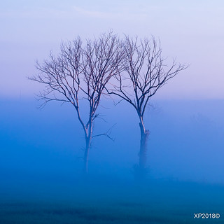 Twins in the fog!