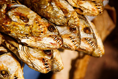 Dried fish at a market in Mali, Mopti region.